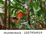 a tropical green rainforest on... | Shutterstock . vector #1057954919
