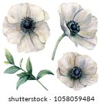 Watercolor White Anemone Set....