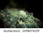 Small photo of Weevil, Curculionidae, walking on wood