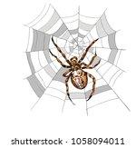 european garden spider  diadem ... | Shutterstock .eps vector #1058094011