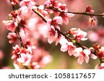 pink with red peach flowers... | Shutterstock . vector #1058117657