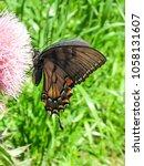 side view butterfly on flowers... | Shutterstock . vector #1058131607