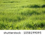 Small photo of Plain and Grass
