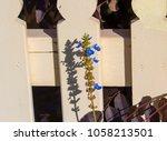 dainty  blue flower spires  of  ... | Shutterstock . vector #1058213501