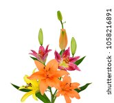 beautiful lily flower isolated... | Shutterstock . vector #1058216891
