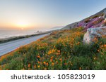 wild flowers and california... | Shutterstock . vector #105823019