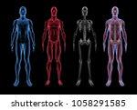 male anatomy  3d body  muscle   ... | Shutterstock . vector #1058291585