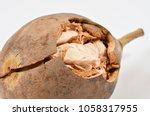 baobab fruit  adansonia... | Shutterstock . vector #1058317955