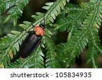 firefly | Shutterstock . vector #105834935