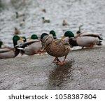the stranger is among his own.... | Shutterstock . vector #1058387804