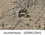 footprints of a eurasian badger ... | Shutterstock . vector #1058412041