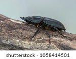 giraffe stag beetle  ...   Shutterstock . vector #1058414501