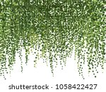 realistic vector ivy plant... | Shutterstock .eps vector #1058422427