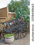 Small photo of A Mexican horse cart with flags sits in front of a huge prickly pear cactus and against an adobe wall.