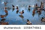male mallard on ice surrounded... | Shutterstock . vector #1058474861