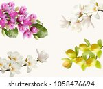 beautiful magnolia flower... | Shutterstock . vector #1058476694