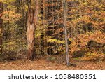 foliage forest background | Shutterstock . vector #1058480351