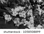 halftone dots effect digitally... | Shutterstock .eps vector #1058508899