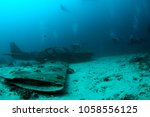 Divers Exploring Wrecked...