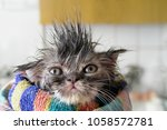 Stock photo funny sweet angry dissatisfied wet kitten wrapped in a towel angry kitten dissatisfied 1058572781