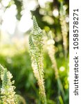 Small photo of Greenery leavy flower