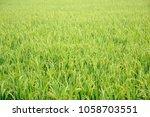 a paddy feild | Shutterstock . vector #1058703551