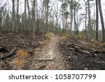 Hiking Trail after Controlled Burns
