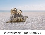 Turtle with backpack on a back.