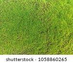 moss texture close up. mossy... | Shutterstock . vector #1058860265