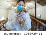 veterinarian holding a chick in ... | Shutterstock . vector #1058939411
