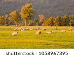 farm sheep on green glass with... | Shutterstock . vector #1058967395