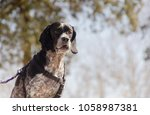hunting dog looking for... | Shutterstock . vector #1058987381