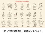 best medicinal herbs for scalp... | Shutterstock .eps vector #1059017114