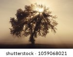 single olive tree in the... | Shutterstock . vector #1059068021