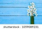 flower. daffodil. spring... | Shutterstock . vector #1059089231