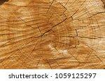 Old Common Oak  Quercus Robur L....