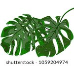 green leaves of tropical palms... | Shutterstock .eps vector #1059204974