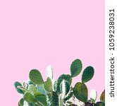 cactus  design. minimal stil... | Shutterstock . vector #1059238031