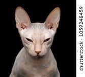 closeup portrait of squints... | Shutterstock . vector #1059248459