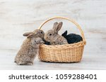 gray beautiful fluffy bunny in... | Shutterstock . vector #1059288401