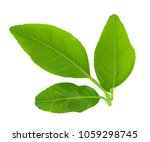 close up of fresh organic green ... | Shutterstock . vector #1059298745