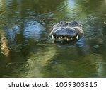 Alligator Staring At Me Is...