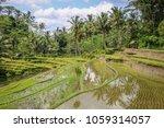 rice terraces at gunung kawi ... | Shutterstock . vector #1059314057