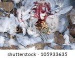 dead wood pigeon crop  filled... | Shutterstock . vector #105933635