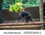 chimpanzee consists of two...   Shutterstock . vector #1059336911