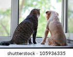 striped  gray cat and dog ... | Shutterstock . vector #105936335