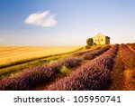 chapel with lavender and grain... | Shutterstock . vector #105950741