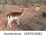 Herd Of Deer In The Park ...