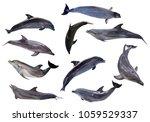 ten grey doplhins isolated on... | Shutterstock . vector #1059529337