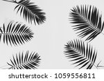 palm leaves on a white... | Shutterstock . vector #1059556811